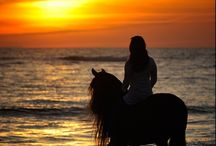 Horses and Riding / Wishing for a horse! :)  ~When life gets bumpy start posting.  / by Olivia Fallon