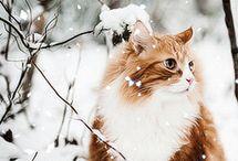 cute animal cat