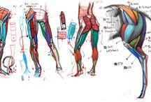 Michael hampton / Anatomy