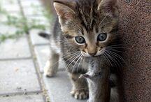 Cute! / by Jillian Stroh