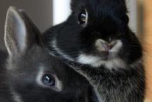 Mammals/ Rodents & Marsupials