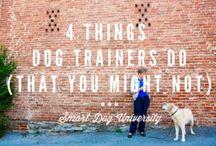 Puppy training for Zara