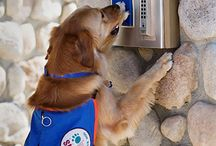 In Honor of Service Dogs  / by American Kennel Club