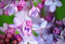 in flower / by Ina Korevaar