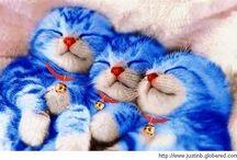 Gatitos <3 / Animales <3