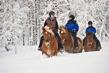 Reiseziele Lappland