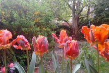 mi jardín , mein Garten.