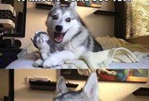 Funny stuff...