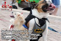 dogforum.gr memes / Μια συλλογή των αστείων και πρωτότυπων memes του dogforum.gr