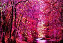 ☆ Pink World ☆