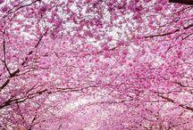 Nature / La nature sous ses plus belles facettes, des cerisiers du Japon en passant par de superbes paysages pour redécouvrir la nature sous un tout nouvel angle.