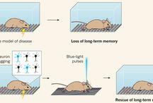 Нейробиология