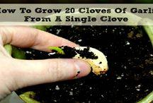 Growing healthy food