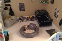 Pet Room
