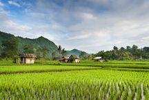 Bali / Bali, het Godeneiland in de Gordel van Smaragd, is een van de mooiste en meest veelzijdige vakantiebestemmingen van Zuidoost-Azië. Dit populaire en betaalbare vakantie-eiland betovert u met z'n adembenemend fraaie landschap met vruchtbare rijstvelden, unieke cultuur en vele tradities. Het prachtige weer, de gastvrije bevolking en het trendy uitgaansleven doen de rest.