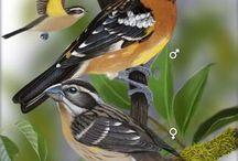 Birds At My Feeders