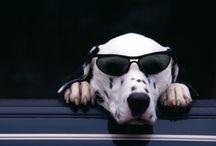 kirek.us / guk guk dog
