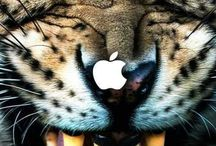 Animal iPhone Wallpapers