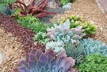 Plantes rocailles