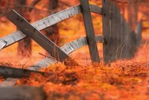fences-çitler