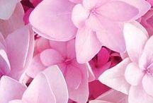 BBB FLOWERS