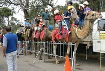 Perth Hills Scenic attractions / Food, wineries and things to do in the Perth hills.