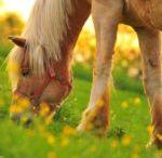 Artykuły związane z końmi