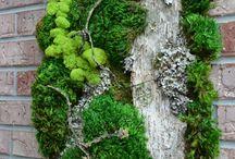 Skulenty a zelené dekorace