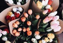 F L O W E R S / Beautiful flowers