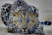 Untamed / The untamed are awesome & should live in the wild. Just my opinion. / by Marcea S