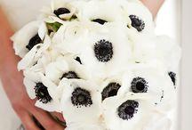 Simple Wedding / Minimalist wedding ideas.