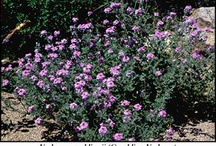 Xeriscape / Plants and Ideas suitable for Desert and Low Water Environments