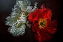 A Botanica / by Avant Gardens
