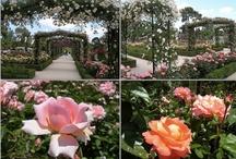Rózsák és gondozásuk
