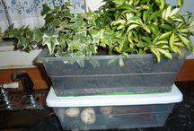 Plante & Jardin / Tout pour la nature