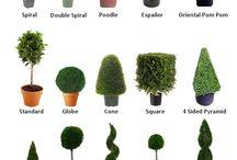 jardinageplantes / Plantes