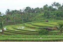Bali / by Susan Wuest