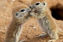 cutes   / by Shawn Peters
