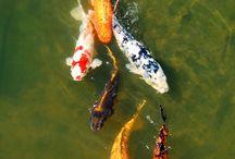 Fishies / by Sheila Minnich