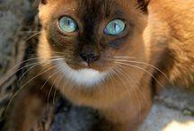 ♡ Multicolor Cats