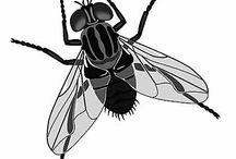 Одежда с  насекомыми
