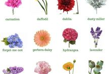 Flowers with names