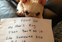 Dog shaming...my new favourite thing / by Jillian Bird