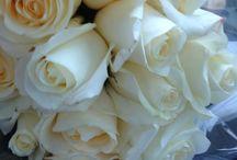 Rose / Flowers