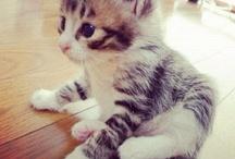 cute cats / cute cats
