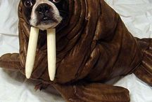 Walrus Pug