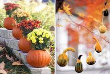 Pumpkins / all about pumpkins