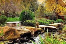 Ashs Garden ideas
