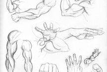 músculos brazos
