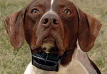 Bark Control Systems / Bark collars and ultrasonic deterrents stop your dog's excessive barking. By giving your dog a harmless yet annoying correction when he barks, your dog will quickly learn to bark less.